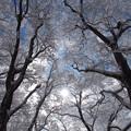 白き森の輝き