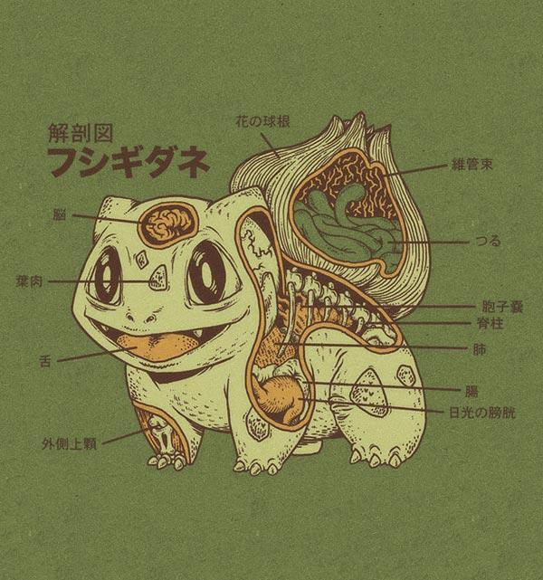 anatomy_hushigidane_01
