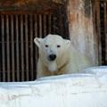 Photos: 天王寺動物園