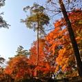 写真: 秋日和?