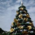 青空の下、南国のクリスマスツリー