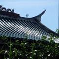 寺の屋根が七色の光を発している。