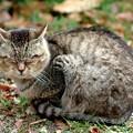 Photos: 野良猫ちゃん1