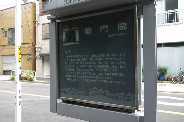伊藤左千夫の墓:普門院@亀戸DSC02105