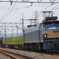 Photos: EF66-33(1072レ)