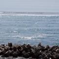 写真: 太平洋
