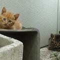 Photos: 07_01チビ猫