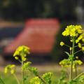 Photos: 山里にも春