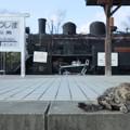 Photos: 猫と機関車