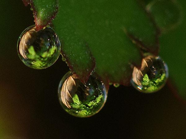 葉っぱを映し込む水滴