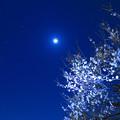 Photos: 月と梅の木