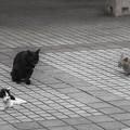 Photos: 三猫三色