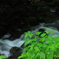清涼(鳥取県 雨滝渓谷)