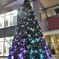 Photos: 1123 クリスマス ?