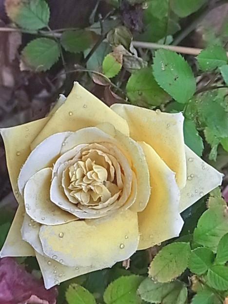 1215 バラ 造花 1