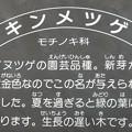 Photos: 0123 名札 モチノキ科 キンメツゲ 002 ?