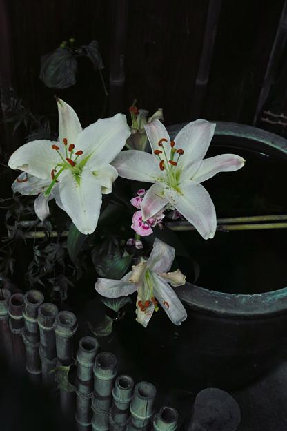 花のいのち