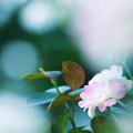 Photos: 夏の朝