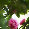 隠れる桃色の花