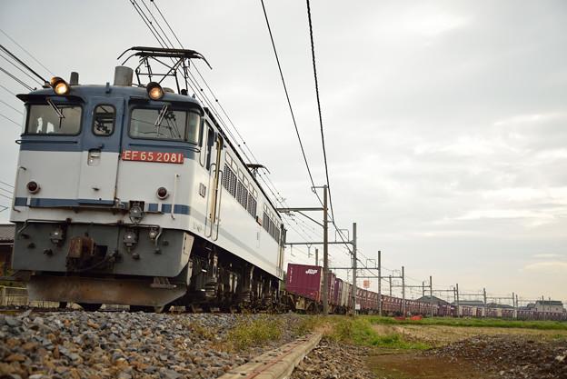 カッツカツやぞ - EF65けん引貨物列車 -