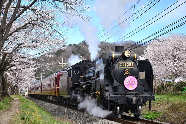 Photos: ~ 長瀞の桜とSL ~ パレオエクスプレス