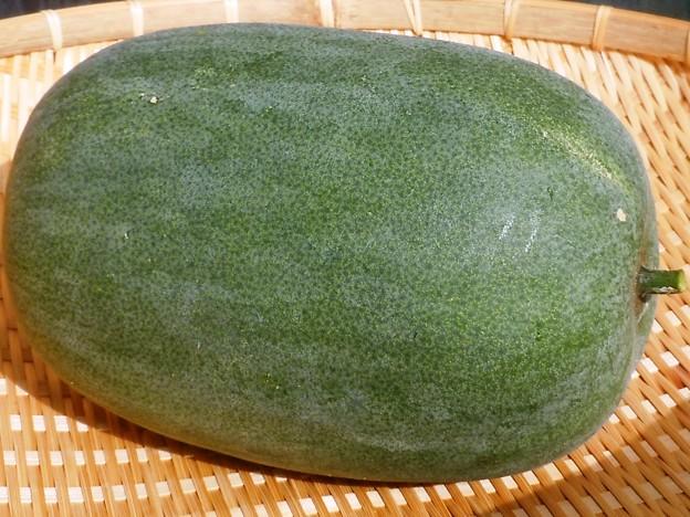 ずっしり重いぞ。今年最後の冬瓜を収穫。重さ3.6kg。