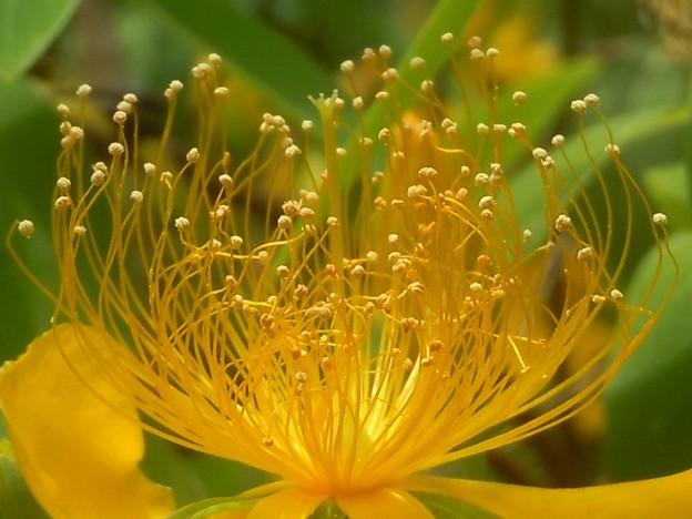 黄金色の針金アート in 瑠璃山