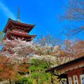 京の寺にも春麗ら