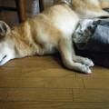 Photos: お疲れ気味!?