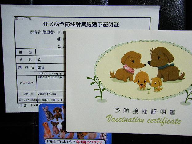狂犬病予防注射実施猶予証明証