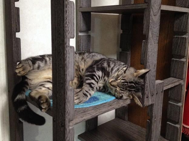 自家製猫タワー