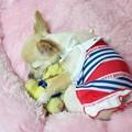 Photos: プーさんと眠る