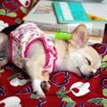 Photos: 勉強疲れ?!