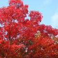 写真: 秋の空に