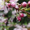 写真: 雨上りの春