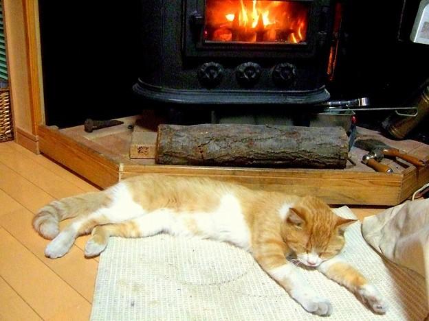 薪ストーブと猫  こぞの冬