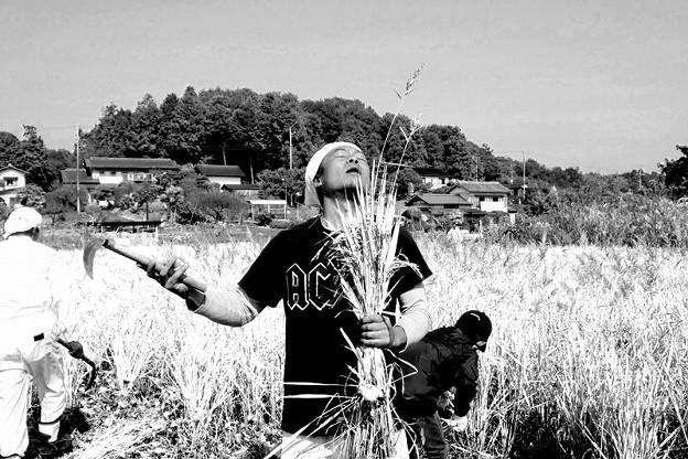 稲刈り 収穫の歌 赤外線フィルム加工 写真共有サイト フォト蔵