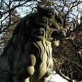 シャハト35mm 高麗神社