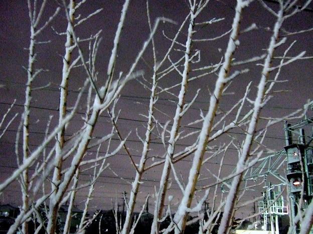 埼玉は雪です