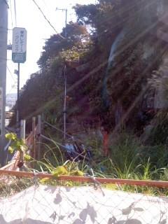 破壊・放置(11月18日、階段市道)
