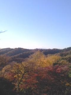 紅葉の眺望(11月30日、かまくら巡り)