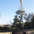 日本庭園 C01416