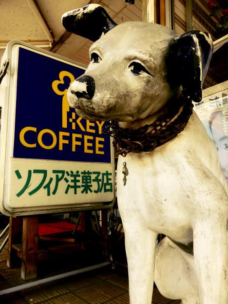 神奈川県横浜市のニッパー