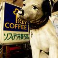 Photos: 神奈川県横浜市のニッパー