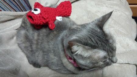 編みぐるみの金魚でーきた