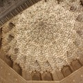Photos: グラナダ:アランブラ宮殿・二姉妹の間の天井飾り(スペイン)