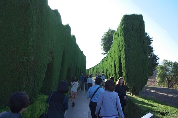 グラナダ:アランブラ宮殿・糸杉の樹間をヘネラリーフェ庭園へ