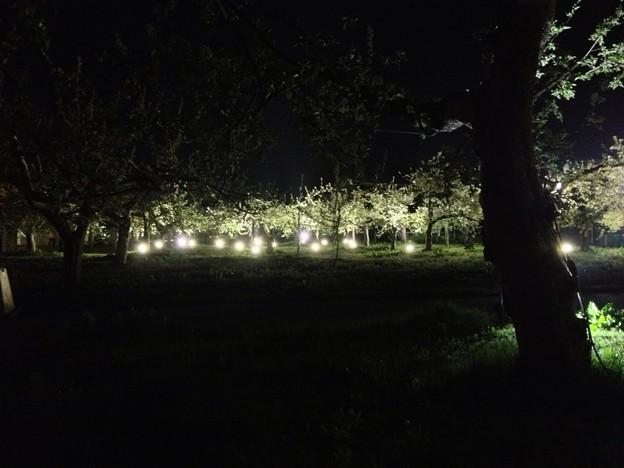 Photos: りんご公園 ライトアップ 3