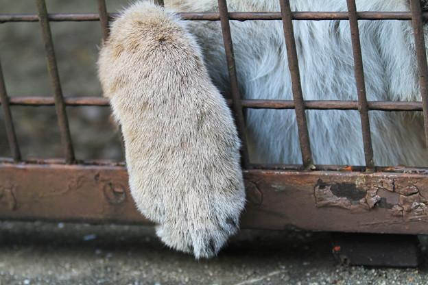 Photos: ネコの手も借りたい・・・