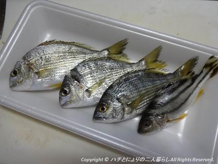 2012-10-20釣り